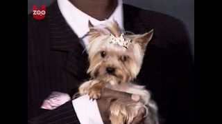 Russian Doggy Bling - Video