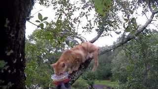 Cat Rescue Guy Saves Traumatized Kitty From Tree - Video