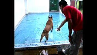 Best Doggy Hotel In The World...Ever? - Video