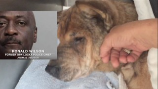 Former Police Chief charged with Abusing his two dogs. State V. Ronald Wilson. - Video