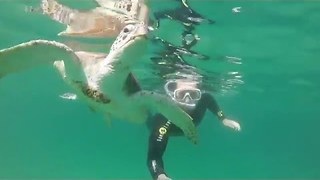 Diver Swims With Turtles, Fish and Sharks in UAE - Video