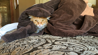 Jack the Cat cuddles up in warm towels - Video