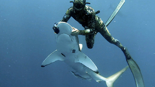 Diver Puts Shark In Trance To Remove Hook From Its Mouth - Video