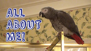 Einstein the Parrot claims it's all about him! - Video