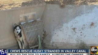 Yay! Crews rescue dog from Phoenix canal