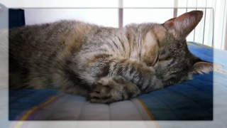 Very cute sleeping cat despite road works - Video