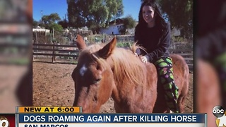 Two dogs sought after attack that killed horse in San Marcos - Video