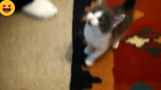 Lovely cats best sweet cat video