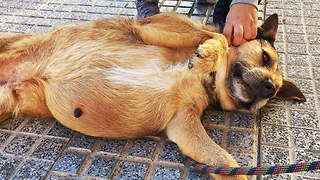 DOG abandoned on the streets with SOMETHING MASSIVE INSIDE HIM!!!  JOIN ME ON THIS RESCUE  - Video