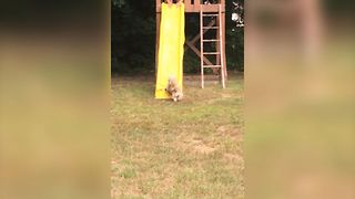 Silly Dog Tries To Run Up Slide - Video