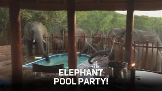 Fancy joining an elephant pool party? - Video