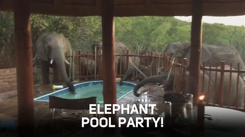 Fancy joining an elephant pool party?