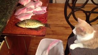 Kitty Gets A Taste For Fish - Video