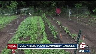 Volunteers plant community gardens on Indy's west side - Video