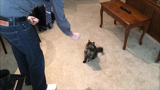 Kitten displays array of tricks, includes playing dead - Video