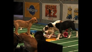 Puppy Super Bowl