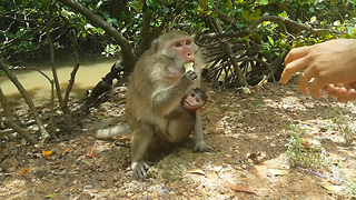 Amazing Mom Monkey with Baby Monkey Eating Cake