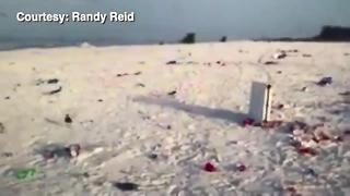 Sarasota County: Pick up your trash on beaches | Digital Short - Video