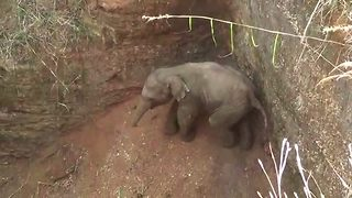 THREE MONTH OLD ELEPHANT CALF RESCUED FROM 30-FOOT DRY WELL USING NETS IN INDIA - Video