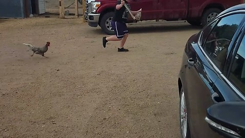 Kid gets chased by a rooster. So Funny.