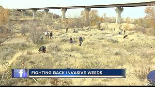 Volunteers restore landscape near the Boise River - Video