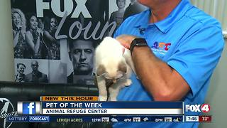 Pets of the week: kittens from ARC
