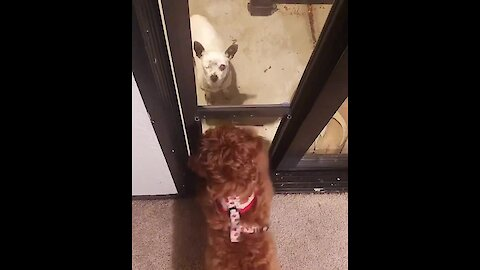 Dogs Try To Communicate Through Door Barrier