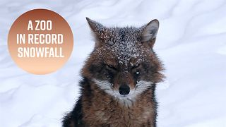 Record snowfall has made the Moscow Zoo gorgeous - Video