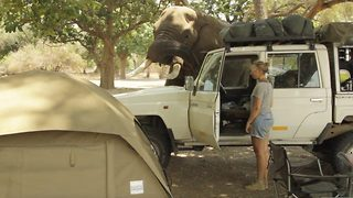 Cheeky elephant caught trying to steal food from van at campsite  - Video