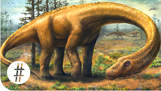 What Is The Biggest Dinosaur To Ever Live? - Video