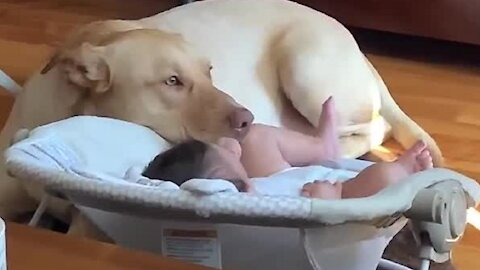 Dog and baby are best friends forever and it's the cutest sight