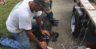 Martin County deputies warning pet owners to be careful after deadly gator attacks