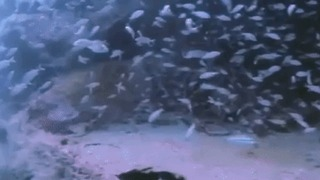 Scuba Diver Startled by Stealthy Shark
