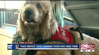 Fake service dogs harming those who need them - Video
