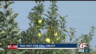Hot weather impacts apples for fall picking - Video