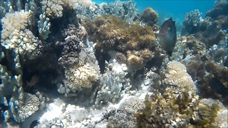 Fish attacks action camera  - Video