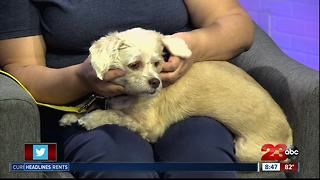 Meet our 23ABC Pet of the Week, Triton! - Video