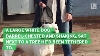 Dog Found Tied to a Tree Shaking, Abandoned in the Cold with Note from Owner - Video