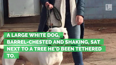 Dog Found Tied to a Tree Shaking, Abandoned in the Cold with Note from Owner