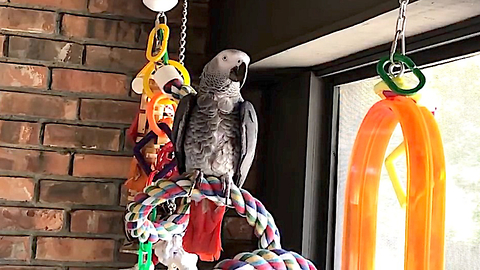 Polite parrot delivers hilarious potty talk