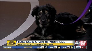 Rescues in Action Aug. 4 | Kadin needs a home