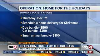 Animal adoption home delivery for Christmas - Video
