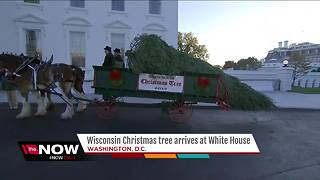 Wisconsin Christmas tree arrives at the White House - Video