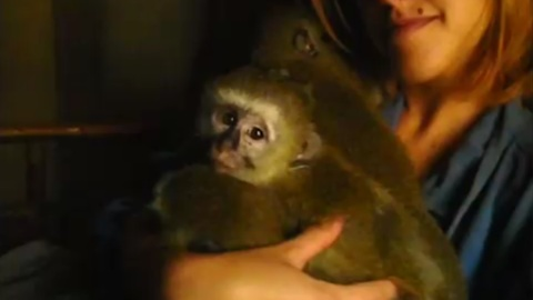 Rescued orphaned monkeys scared of the rain