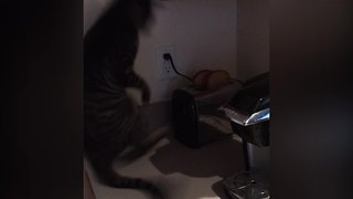 """""""Toaster Popping Freaks Cat Out"""""""