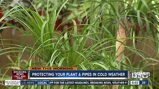 Protecting plants, pipes from cold - Video