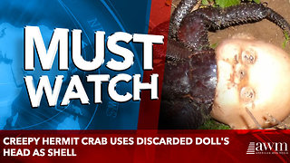 Creepy hermit crab uses discarded doll's head as shell - Video