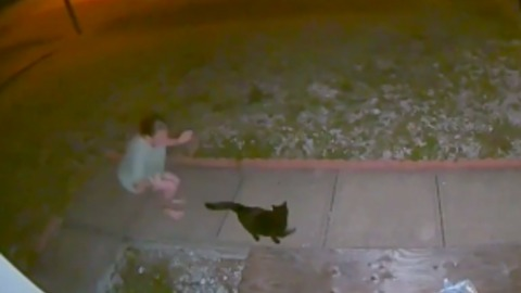Stray Cat Sprays Lady! Caught On Camera!