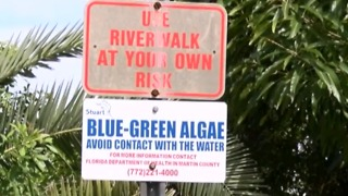 Governor issues emergency order to help battle possible toxic algae blooms - Video