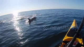 Breathtaking moment dolphins speed alongside kayaker